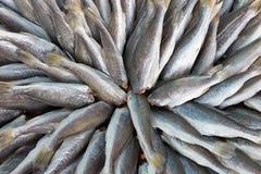 Droge vissen Thailand Stock Afbeelding