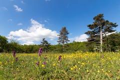 Droge weide met orchideeën in Buis DE Ferreyres, Zwitserland stock foto