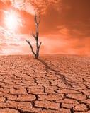 Droge woestenij zonder water Dode boomstomp Zonstralen op rode hemel royalty-vrije illustratie