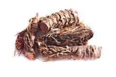 Droge wortel van Rhodiola-rosea Royalty-vrije Stock Foto's