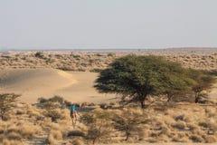 Drogen de groene bomen van het woestijnlandschap struik enige kameel met ruiter Stock Foto