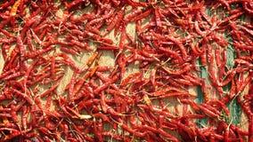 Drogend de roodgloeiende peper van Chili op de mat - Kruidmarkt in India Royalty-vrije Stock Fotografie