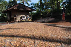 Drogend gebied in het platteland van Bali Stock Foto's