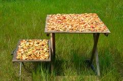 Drogende appelen Stock Foto