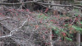 Drogende bomen in de herfst stock video
