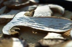 Drogende paddestoelen Stock Foto's
