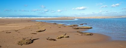 Drogende seagrass op landengte van zand tussen Vreedzame oceaan en Santa Maria-rivier bij Rancho Guadalupe Sand Dunes - Californi royalty-vrije stock afbeeldingen