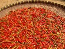 Drogende Spaanse pepers Stock Fotografie