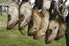 Drogende vissen royalty-vrije stock afbeelding