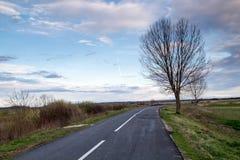 Drogi boczny drzewo Obraz Royalty Free
