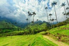 Drogi i wosku palmy obrazy stock