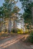 Drogi krajobrazowy pobliski Sir Lowrys Przechodzący Zdjęcia Royalty Free