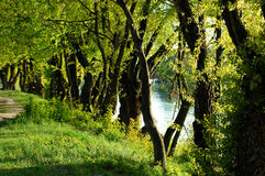 drogi lasów, Obrazy Stock