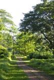 drogi na drzewo Obrazy Royalty Free