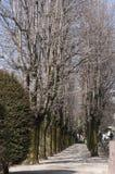 drogi na drzewo Zdjęcia Royalty Free