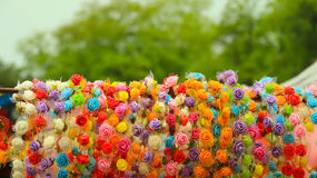 Drogi strony róży korony pokaz Obraz Royalty Free