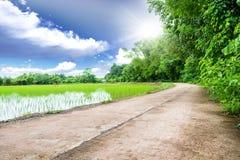 Drogowa łąka Zdjęcia Royalty Free