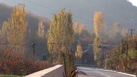 Drogowa sceneria w jesieni zbiory wideo
