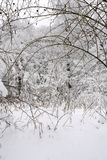 drogowa sezonu drzew biel zima Obraz Royalty Free
