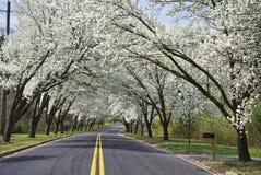 drogowa wiosna Zdjęcie Stock