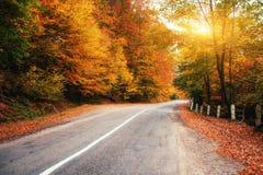 drogowe piękne góry Karpacki Ukraina Europa Zdjęcia Royalty Free