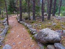 Drogowy ścieżka ślad w halnej sosny lasach Fotografia Royalty Free