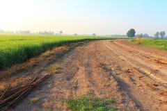 Drogowy pobliski ryżu pole Obrazy Royalty Free