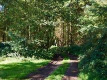 Drogowy wycieczkuje ślad w pięknym lesie Obrazy Royalty Free