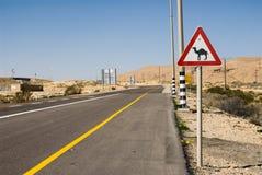 Ono wystrzega się wielbłądy blisko De Droga Fotografia Stock