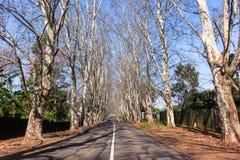 Drogowych drzew Sceniczna eksploracja zdjęcia royalty free