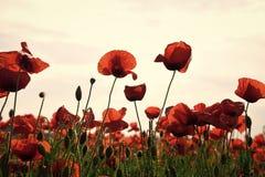 Drogue et intoxication d'amour, opium, médicinal photographie stock