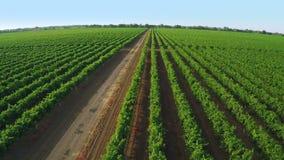 Drohne entfernen sich über einem Weinberg Luftvideo stock footage