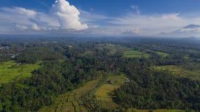 Drohnenfliegen über schönen Reisterrassen stockfotos