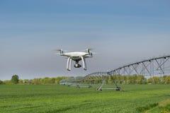 Drohnenfliegen über Weizenfeld Stockbild