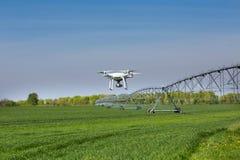 Drohnenfliegen über Weizenfeld Lizenzfreie Stockfotografie