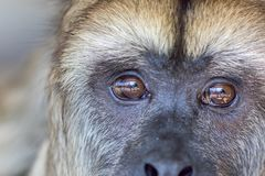 Droits des animaux Expression triste sur le visage du captif sauvé comment photographie stock libre de droits