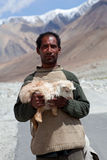 Drokpa nomad, Ladakh, India. LADAKH, INDIA - JUNE 15: An unidentified Tibetan nomad with goatling poses for a photo on the road to Spangmik village on June 15 Stock Photo