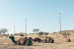Dromedar in der Thar-Wüste, mit Windkraftanlagen lizenzfreies stockbild