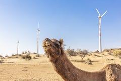 Dromedar in der Thar-Wüste, mit Windkraftanlagen stockfotos