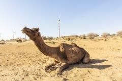 Dromedar in der Thar-Wüste, mit Windkraftanlagen lizenzfreies stockfoto
