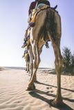 Dromedar mit Touristen in der Thar-Wüste lizenzfreie stockfotos