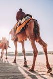 Dromedar mit Touristen in der Thar-Wüste stockfotos