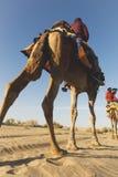 Dromedar mit Touristen in der Thar-Wüste stockbilder