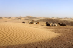 Dromedare unter Sanddünen, Marokko. Stockbild