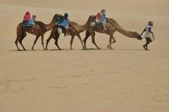 Dromedari in duna natale fotografia stock