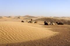 Dromedaries among sand dunes, Morocco. Stock Image