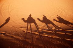 Dromedaries shadows. Erg Chebbi, Sahara, Morocco. Erg Chebbi is one of Moroccos two Saharan ergs, large dunes formed by wind-blown sand Royalty Free Stock Photography