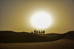 Dromedaries silhouettes. Silhouettes of dromedaries in the desert of Merzouga Stock Photos