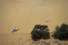 Dromedario del montar a caballo del hombre Fotografía de archivo libre de regalías