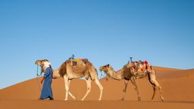 Dromedariscaravan met nomade in Sahara Desert Morocco stock foto's